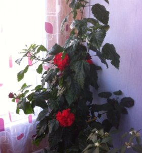 Цветы от 500 и выше