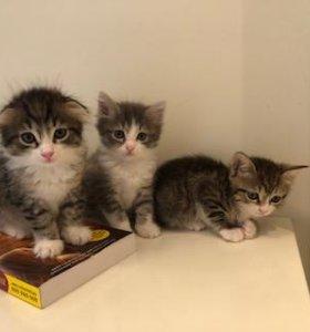 Кошачьи мордашки в поиске дома!