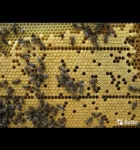 Продаю пчелопакеты