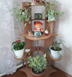 Продам полку под цветы цена 2000 руб.