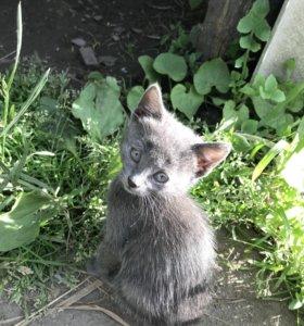 Отдам котят в добрые руки. 2 кошечки и 1 котик.