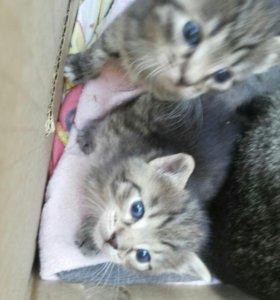 Отдам котят в добрые руки 2 мальчика и 1 девочка