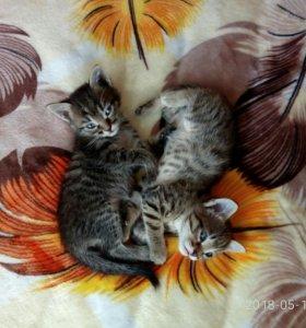 Котята полосатые
