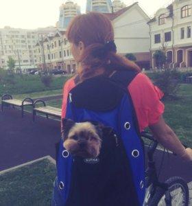🐕 Новый рюкзак 🎒 для собак 🐶 «Спорт»