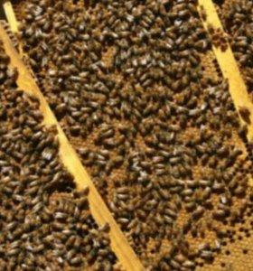 Продаю пчелопакеты , пчелосемьи