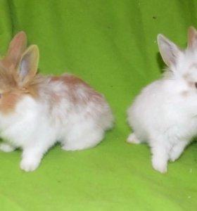 Очаровательный декоративный мини кролик