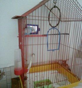 Волнистый попугайчик с клеткой.