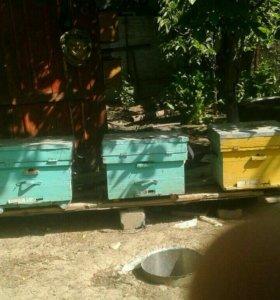 Ящики для пчел