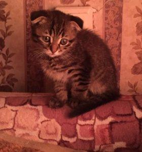 Продам котёнка 3 месяца