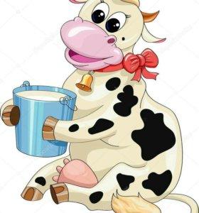 Корова дойная на выбор...