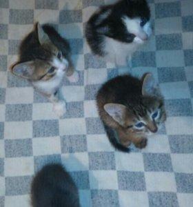 Маленькие миленькие котята