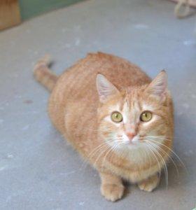 Кошечка Даша ищет дом