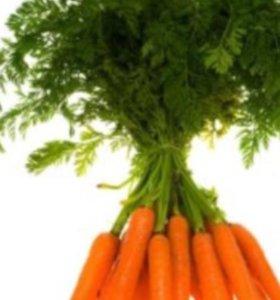 Морковь из ямы 4 ведра - добрая крупная!