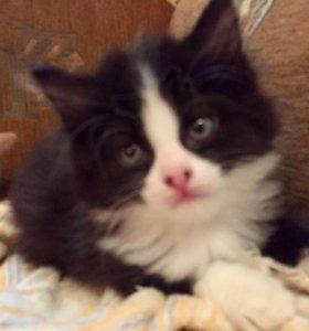 Котята - любящим хозяевам