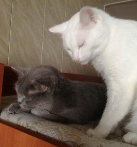 Коты ищут новый дом