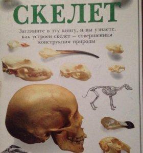 Книга Скелет из серии Очевидец обо всем на свете