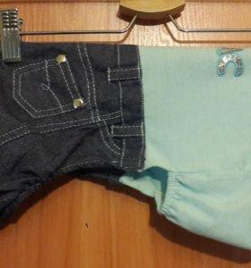 Костюм для собак (джинсы+майка)