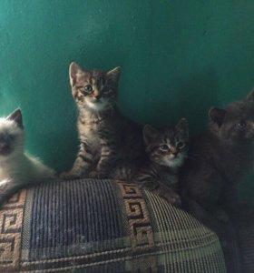 Котята ( 2 мальчика и 2 девочки)