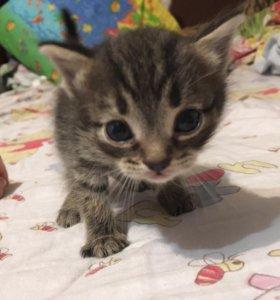 Отдам в добрые руки котяток