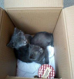 Котик и 2  кошечки