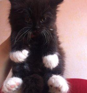 Котята 😻мальчик чёрный,девочка серая