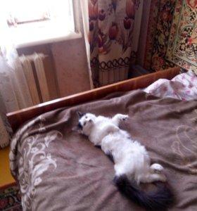 Пропал кот!