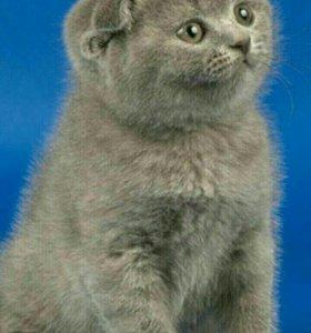 Плюшевый вислоухий котенок