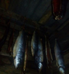 Рыба красная, холодного копчения