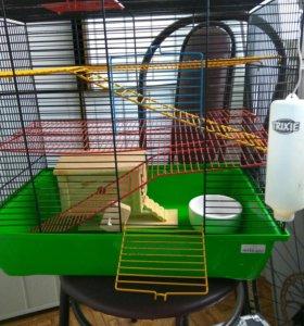 Клетка и корм для крысы.