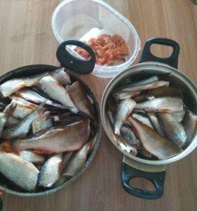 Рыба мелкая (окуни ,плотва )