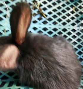 Кролики маленькие.