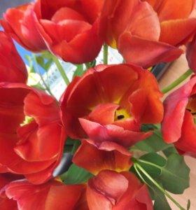 Тюльпаны ⚘⚘возможен обмен