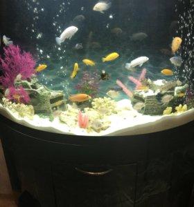 Продам действующий аквариум на 160 литров!