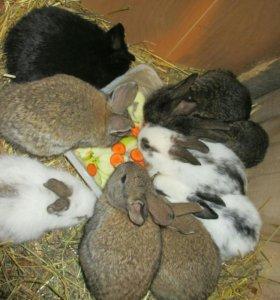 Мясо кролика 300р за кг