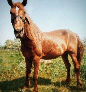 Лошадь с телегой и сбруей