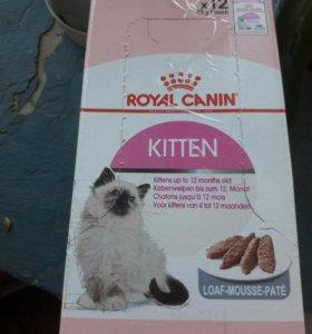 паучи Роял канин для котят.
