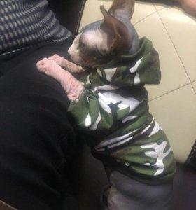 Толстовка для собак/котов