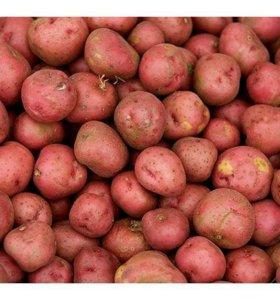 Картошка с доставкой