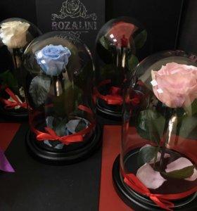 Розы в Колбе Оптом и розницу