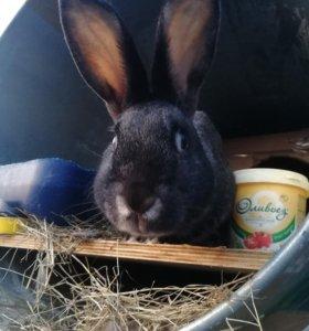 Крольчихи покрытые