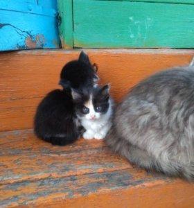 Славные котята ищут своих хозяев