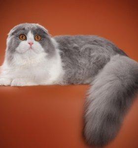 Без кота жизнь не та!