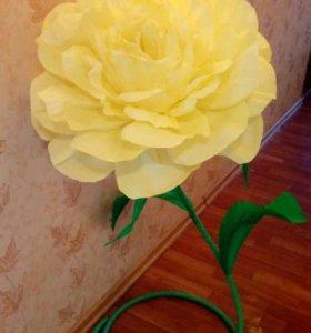 Ростовая роза