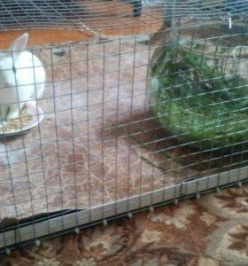 Ручной декоротивный кролик