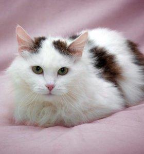 Мальта нежная и невероятная кошка 2,5 года в дар