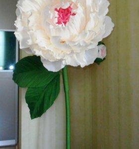 Цветы ростовые