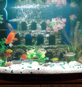 Аквариум с рыбками!