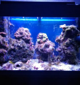 Морской аквариум Juwel rio 125л с тумбой