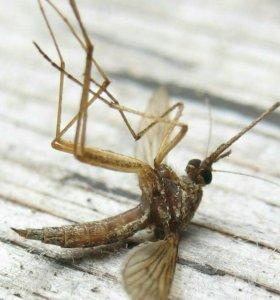 Обработка от комаров, клещей.