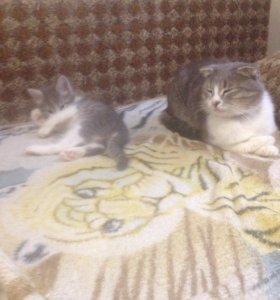 Котенок-милашка